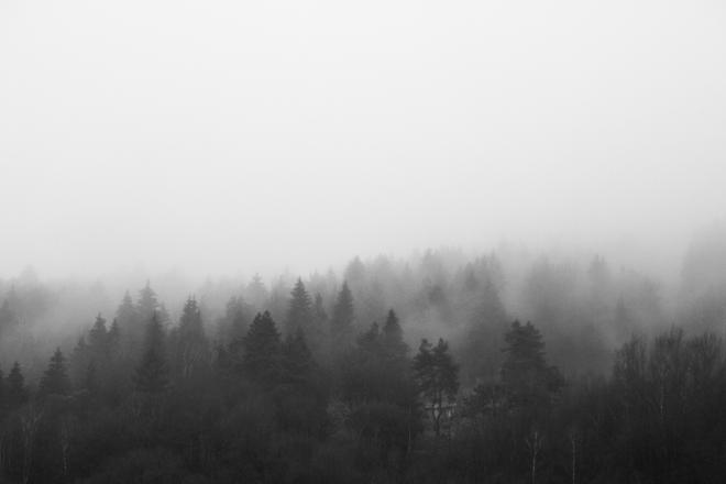 black-and-white-morning-foggy-forest-picjumbo-com